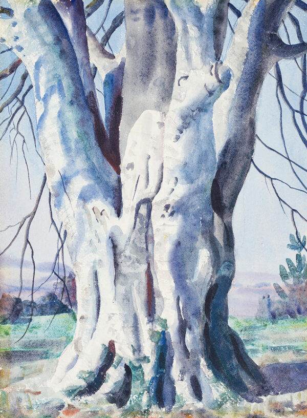 PROCTER Ernest A.R.A. (1885-1935) - The trunk of a massive beech tree.