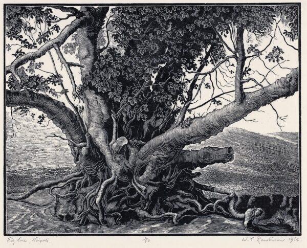 RAWLINSON William Thomas S.W.E. (1912-1993) - 'Fig tree, Tripoli'.