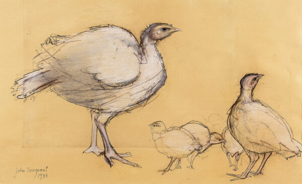 SERGEANT John (1937-2010) - Studies of Turkeys.