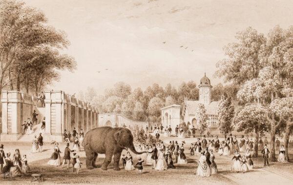 SHEPHERD Thomas Hosmer (1792-1864) - Regent's Park Zoo.