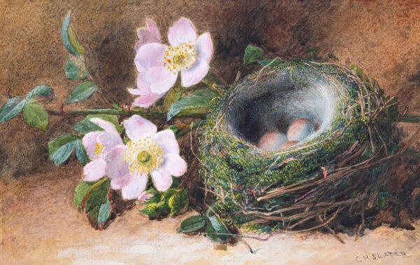 SLATER Charles (1820-1890) - Still-life: dog roses and bird's nest.