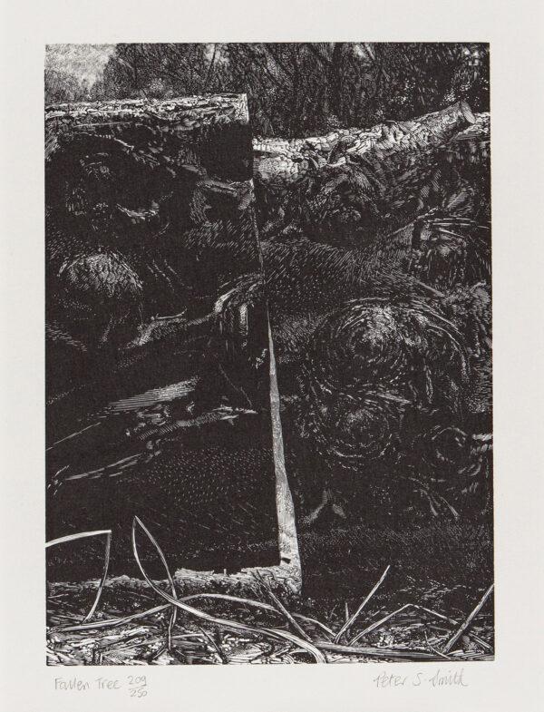 SMITH Peter R.E. S.W.E. (b.1945) - 'Fallen Tree', Richmond Park.