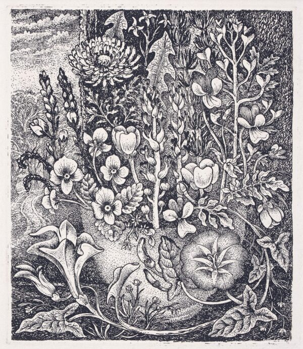 TANNER Robin (1904-1988) - 'Weeds'.