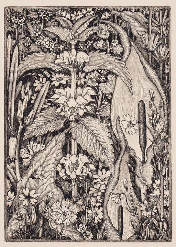 TANNER Robin A.R.E. (1904-1988) - 'Hedge Flowers'.