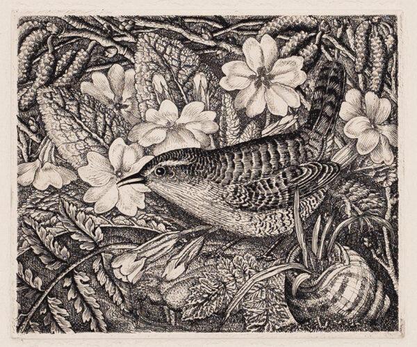 TANNER Robin A.R.E. (1904-1988) - 'Wren and Primroses'.
