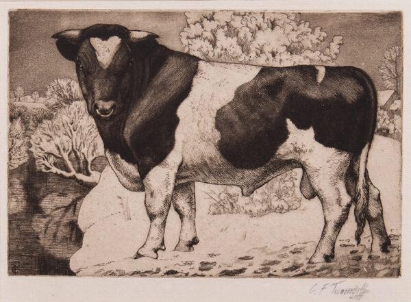TUNNICLIFFE Charles Frederick O.B.E. R.A. R.E. (1901-1979) - A Black and White Bull.