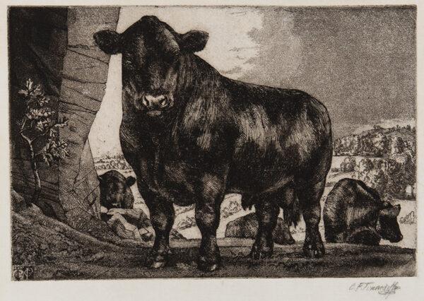 TUNNICLIFFE Charles Frederick O.B.E. R.A. R.E. (1901-1979) - A Black Bull.