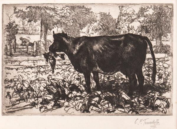 TUNNICLIFFE Charles Frederick O.B.E. R.A. R.E. (1901-1979) - Cow eating a turnip Etching.
