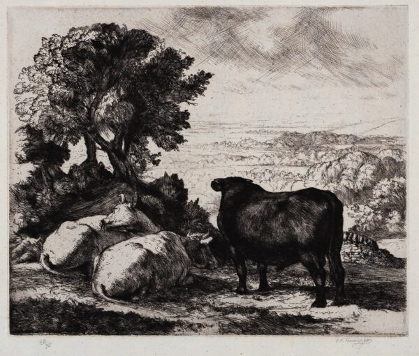 TUNNICLIFFE Charles Frederick O.B.E. R.A. R.E. (1901-1979) - Bull and two cows.