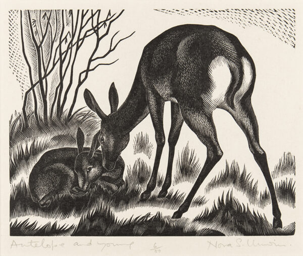 UNWIN Nora S (1907-1982) - 'Antelope and Young'.