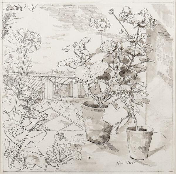 WARD John Stanton C.B.E. (1917-2007) - Geraniums and glass houses, probably at the Holbeach Bulb Company.