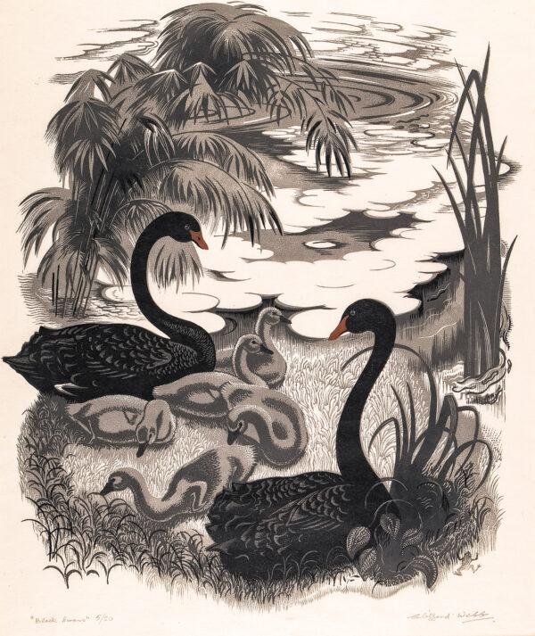 WEBB Clifford (1895-1972) - 'Black Swans'.