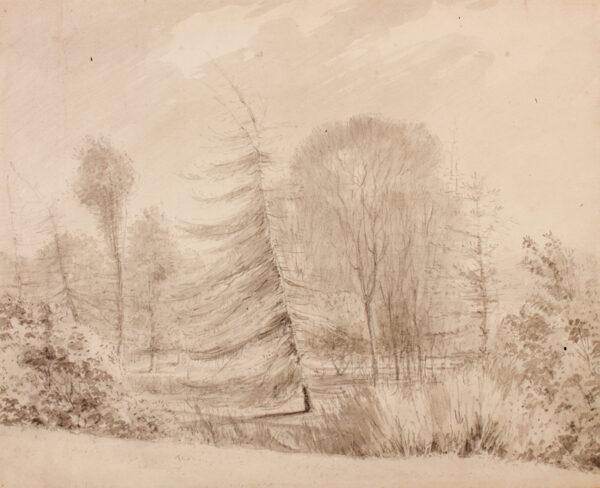 BARNARD Rev. William Henry (1769-1818) - Tree study.