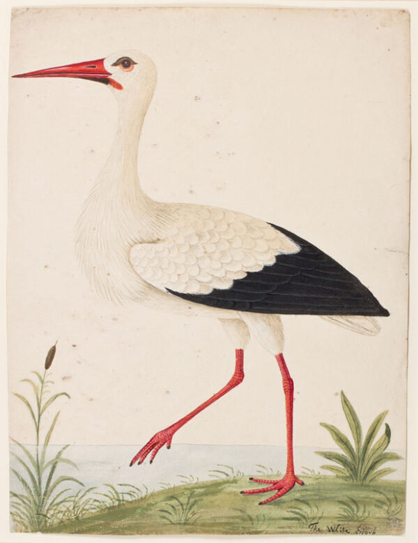 BIRDS - - Fourteen Eighteenth Century decorative watercolour