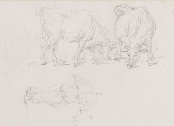 CHINNERY George (1774-1852) - Studies of cows and a figure.