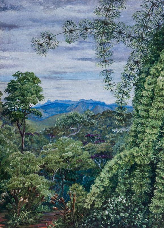 NORTH Marianne (1830-1890) - 'View in Minas Geraes.