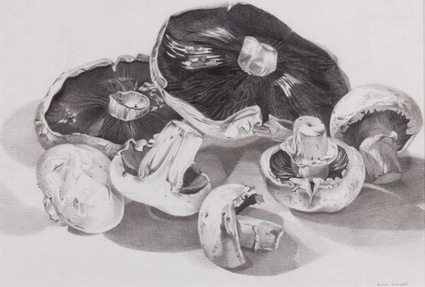 DESMET Anne R.A. (b.1964) - 'Mushrooms (Sketchbook)'.