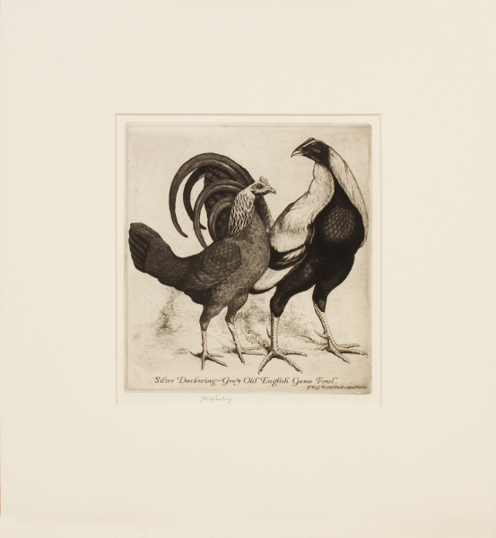 EXLEY James Robert Granville R.E. (1878-1967) - 'Silver Duckwing – grey Old English Game Fowl'.