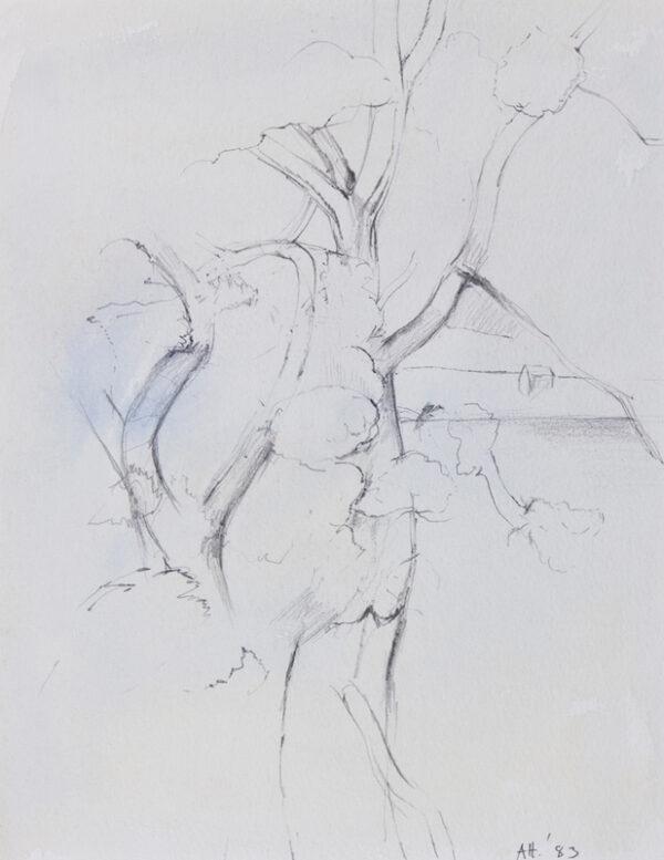 HEATH Adrian (1920-1992) - 'A tree seen through a window at Voss'.