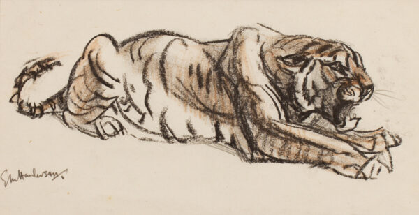 HENDERSON Elsie (1888-1967) - Study of a tiger.