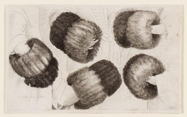 HOLLAR Wenceslaus (1607-1677) - A muff in five views.