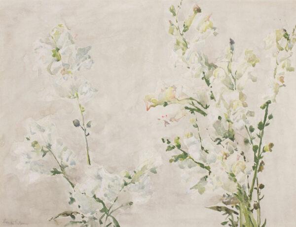 JAMES Francis N.E.A.C (1850-1920) - 'White on White'.