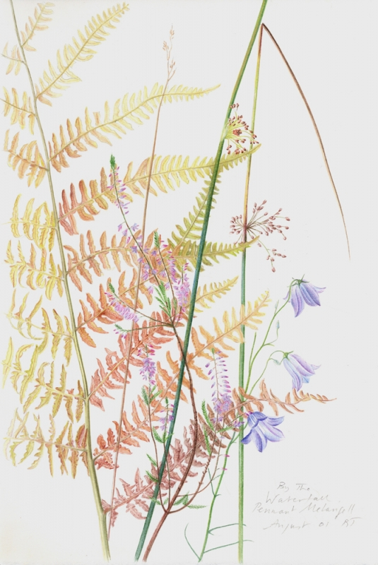 Rebecca JOHN - Drawings and Studies from Nature.