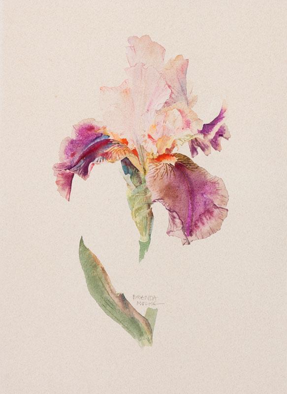 MOORE Brenda (Contemporary) - 'Garden Iris'.