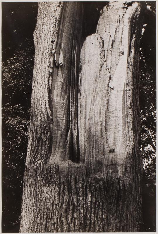NASH Paul (1889-1946) - 'Tree Wound'.