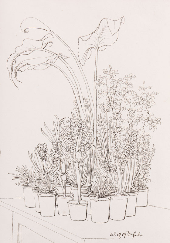REUTERN Gerhardt Wilhelm von (1794-1865) - Hothouse plants.