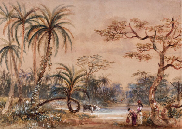 TOYNBEE - 'Date Palms at the (?) Madras / from a sketch by Mrs Toynbee / Jan 18th 1858 / on Steam Ship Gloriana, March 19th 1858'.