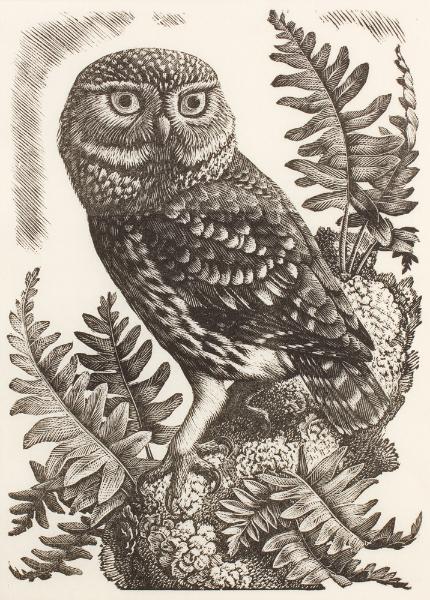 TUNNICLIFFE Charles Frederick O.B.E. R.A. R.E. (1901-1979) - 'Owl' with ferns.
