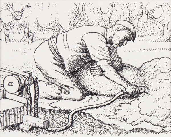 TUNNICLIFFE Charles Frederick O.B.E. R.A. R.E. (1901-1979) - Shearing with electric clippers.