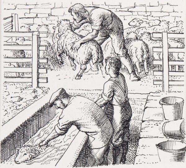TUNNICLIFFE Charles Frederick O.B.E. R.A. R.E. (1901-1979) - Dipping sheep.