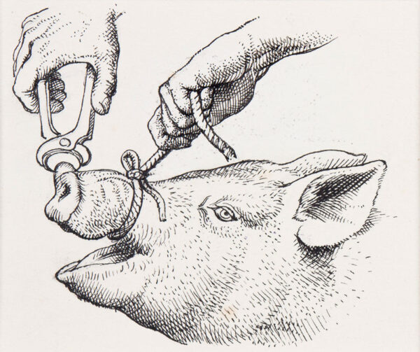 TUNNICLIFFE Charles Frederick O.B.E. R.A. R.E. (1901-1979) - A ring for the pig.