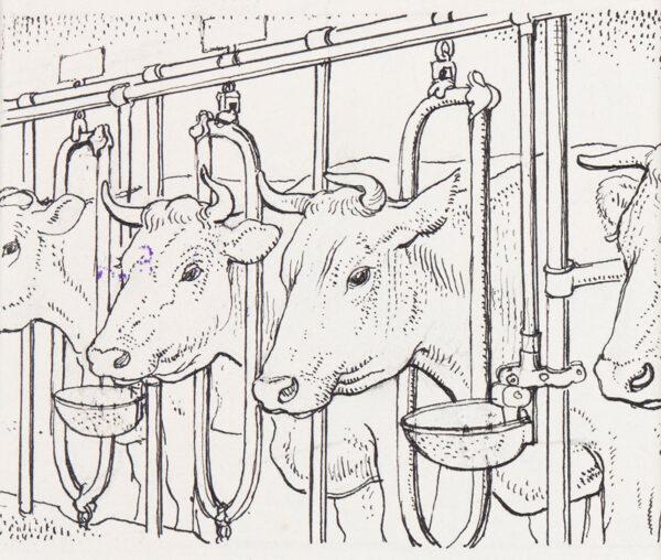 TUNNICLIFFE Charles Frederick O.B.E. R.A. R.E. (1901-1979) - Cow in the byre.