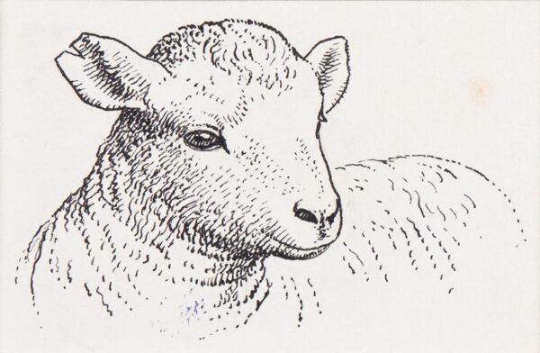 TUNNICLIFFE Charles Frederick O.B.E. R.A. R.E. (1901-1979) - The lamb.