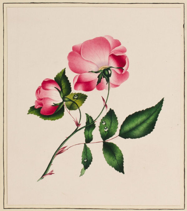 FLOWERS - Fifteen Nineteenth Century watercolours from a Victorian album.