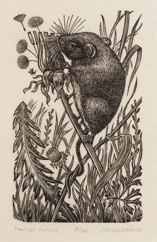 WOODCOCK John (b.1924) - 'Harvest Mouse'.